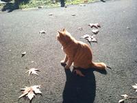 日向猫.jpg