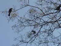 鳥たち.JPG