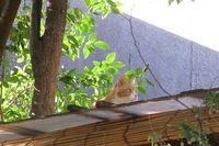 屋根猫2.jpg