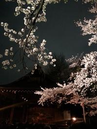 夜桜能.jpg